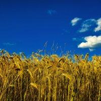 Благодатный урожай :: юрий Амосов