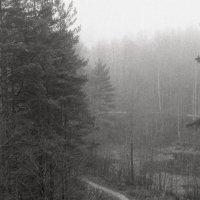 Туманными тропами :: Дмитрий Ромашев