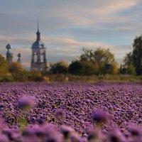 Пчелиный рай... :: Оксана Колиева