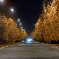 Последние листья :: Александр Линник