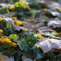 Первые осенние заморозки :: Андрей Мешков