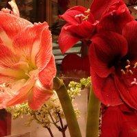 в цветочном магазине :: Валентина Папилова