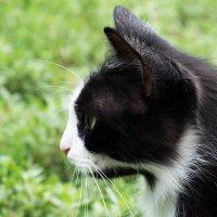 моя кошка Дульсинея :: Алёна Нетесова
