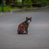 Уличный боец :: Антон Бердников
