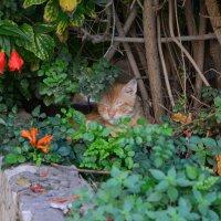 Уснула все таки в засаде.. :: Ефим Хашкес