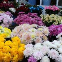Ноябрьские цветы :: Светлана