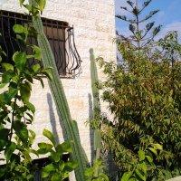 А у кого то кактусы под окнами...:) :: Жанна Викторовна