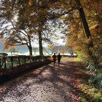 Осенний марафон :: Boris Alabugin