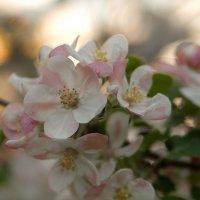 Весна :: Александра