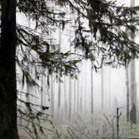 Осенний лес :: Андрей Скорняков