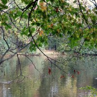 В парке на Елагином острове. :: Валентина Жукова