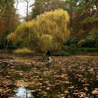 В птичьем парке :: Alexander Andronik