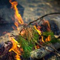Можно вечно смотреть на огонь.... :: Нина Пермякова
