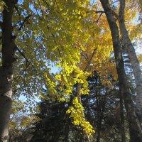 В парке... :: Нина Бутко