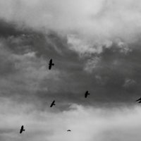 Черные крылья :: Алексей Щелкунов