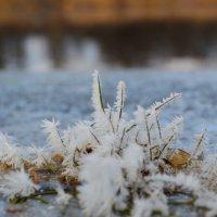Первые заморозки :: Kov66