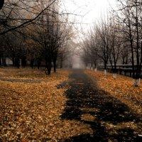 Осенний туман :: Екатерина Дмитренко