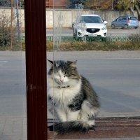Автобусная остановка ,за стеклом ))) :: Наталья Мельникова