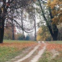 дорогами осени :: Инна Малявина