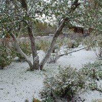 Первый снег :: Вера (makivera)