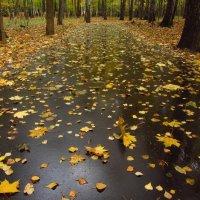 Осень - это не только ноябрь. Октябрь :: Андрей Лукьянов