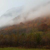Утро в тумане :: Игорь Гарагуля
