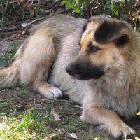 Собака на отдыхе :: Дмитрий Никитин