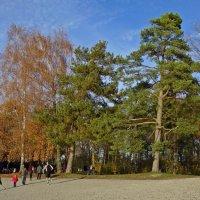 Теплый ноябрь....... :: Galina Dzubina