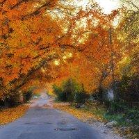 Осенний вечер на окраине :: M Marikfoto
