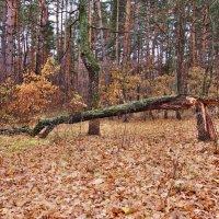Осени этюды. Медведи смылись, бревно осталось...:)) :: Александр Резуненко