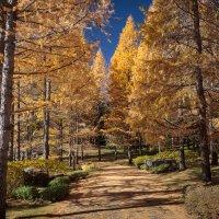 Осень :: Валерий Цингауз