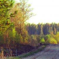 Дорога в лес :: alek48s