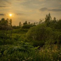 Лето, вечер :: Наталья Лакомова