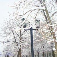 В городе первый снег! :: °•●Елена●•° Аникина♀