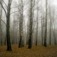 Утро туманное...(в парке) :: Ольга П