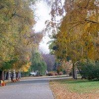 Осенний парк. :: Наталья