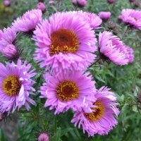 Цветы октября. :: zoja