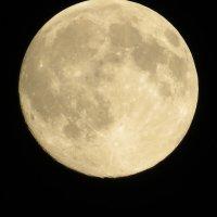 Луна на юге :: Вера Щукина
