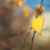 Анапа, 15 ноября :: Михаил Тихонов