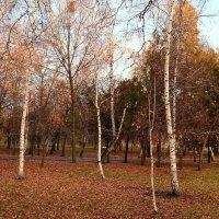 Осень. Берёзки :: Владимир Болдырев
