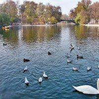 Птичье царство! :: Наталья