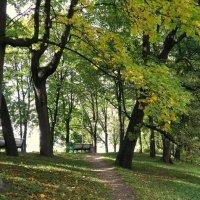 Парк на Елагином острове. :: Валентина Жукова