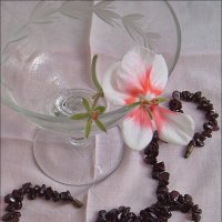 """Цветок герани  """"Яблоневый цвет"""" и гранатовое ожерелье :: Нина Корешкова"""