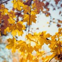 У нас еще осень... :: Алексей Бойко