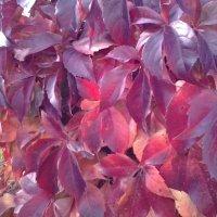 ,,Прячет в листьях ноябрь подмороженный хвост.,, :: Жанна Викторовна