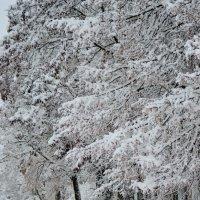 снег :: Светлана Рос