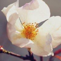 И в ноябре цветут розы :: Swetlana V