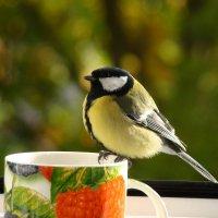 гурманка :: linnud