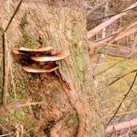 Тоже грибы! :: Владимир Болдырев