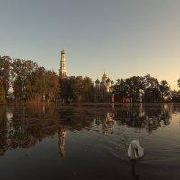 Белый лебедь в Николо-Угрешском монастыре :: Александра